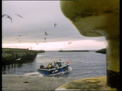 small boat with several passengers leaves ayr harbour bollard in foreground seagulls swooping around above. - ayr stock videos & royalty-free footage