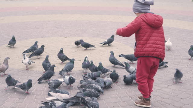 Small boy feeding pigeons on the street