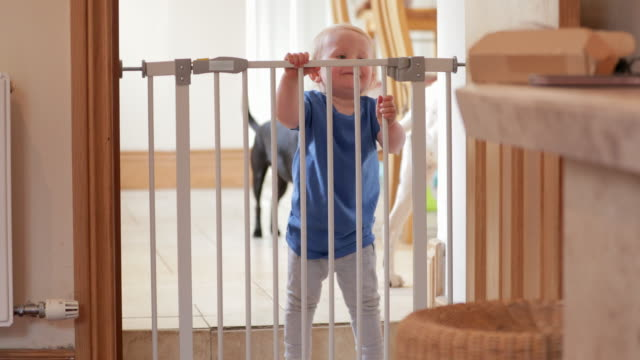 small boy holds on to safety gate - protezione video stock e b–roll