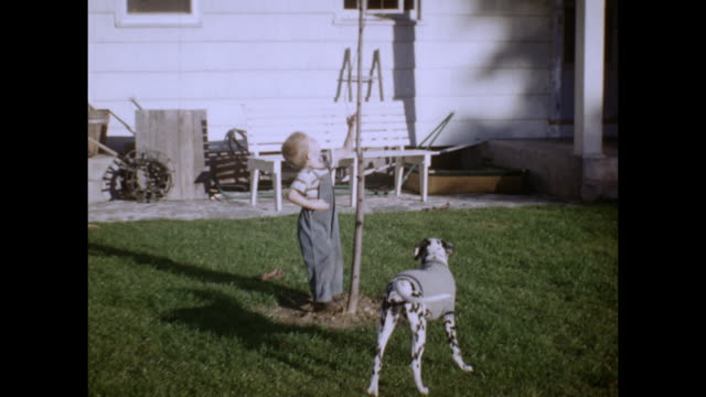 a small boy plays with his dalmation dog outdoors. the dogs wears a sweater. - dalmatian dog stock videos and b-roll footage