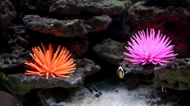 vídeos de stock e filmes b-roll de peixe pequeno brilhante no leito do oceano - grupo médio de animais