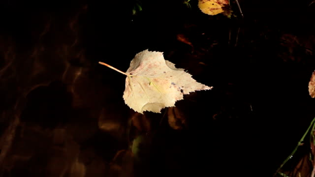 small bug finding way on a floating leaf - floating on water stock videos & royalty-free footage