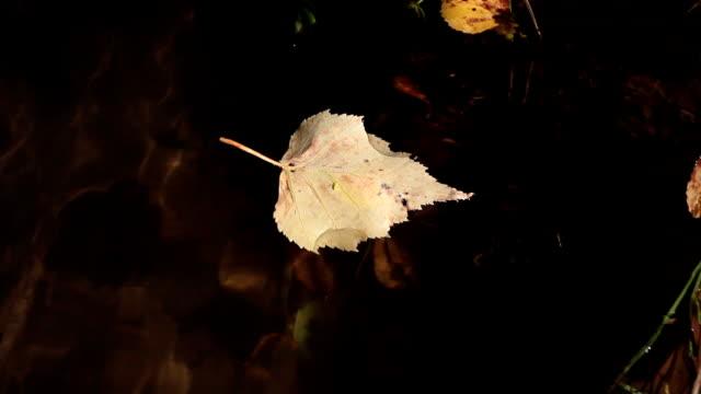 vídeos y material grabado en eventos de stock de pequeña corrección de búsqueda de vías en una hoja de flotación - árbol de hoja caduca