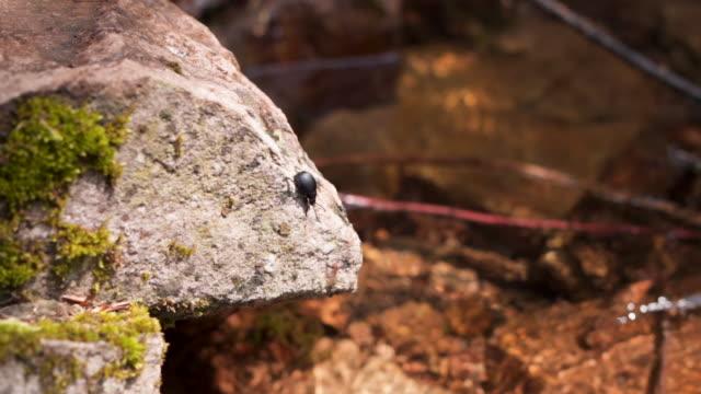 small bug on a rock - invertebrato video stock e b–roll