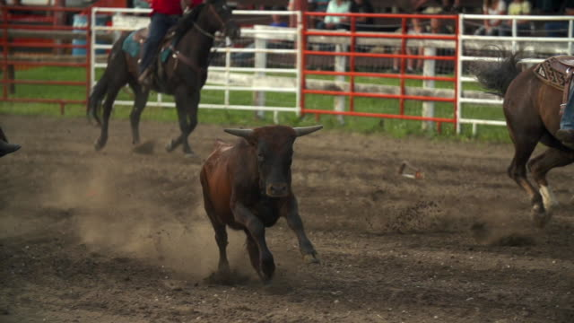 a small bull runs among the horses at rodeo - badlands national park stock videos & royalty-free footage