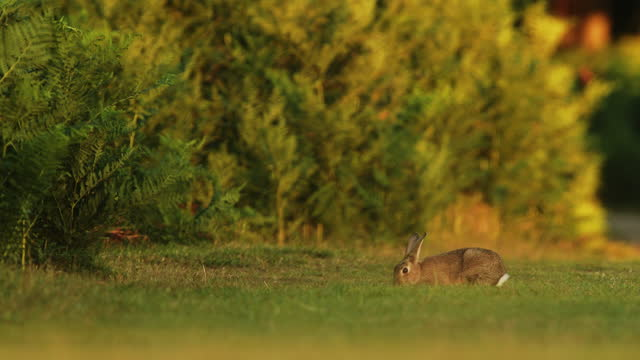 small bunny rabbit in outdoor grass field - wild animal photography scene - april stock videos & royalty-free footage