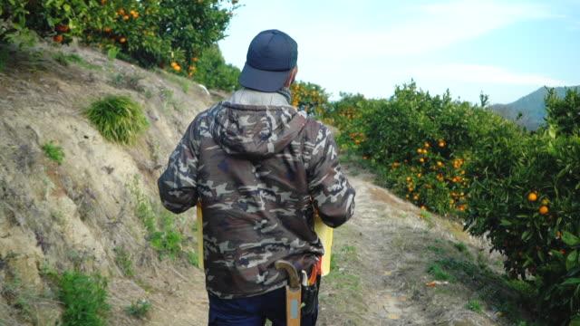柑橘類農場でオレンジのクレートを運ぶ中小企業の農場の所有者 - 農作業点の映像素材/bロール