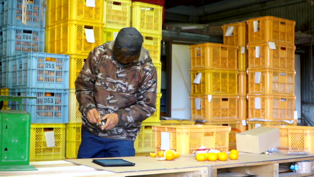 a small business farm owner checking the sweetness of oranges with a refractometer at his citrus farm - nishiseto expressway stock videos & royalty-free footage