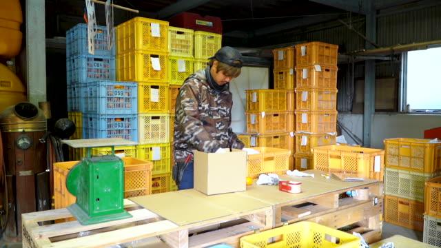 顧客に直接出荷するための準備のためにオレンジを梱包する中小企業の農場の所有者 - 農業点の映像素材/bロール
