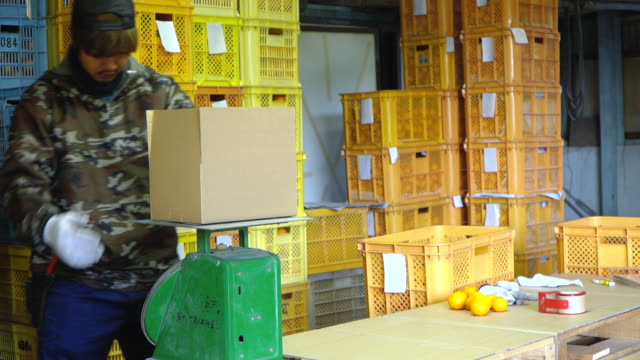 a small business farm owner packing oranges in preparation for shipping direct to the customer - cultures stock videos & royalty-free footage