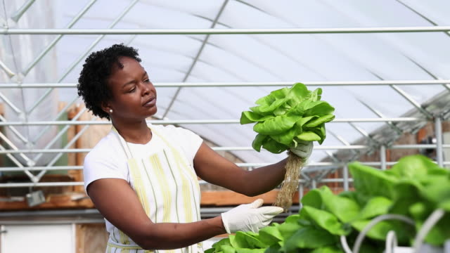 MS TU TD Small Business Owner in Hydroponic Lettuce Farm Greenhouse / Richmond, Virginia, United States