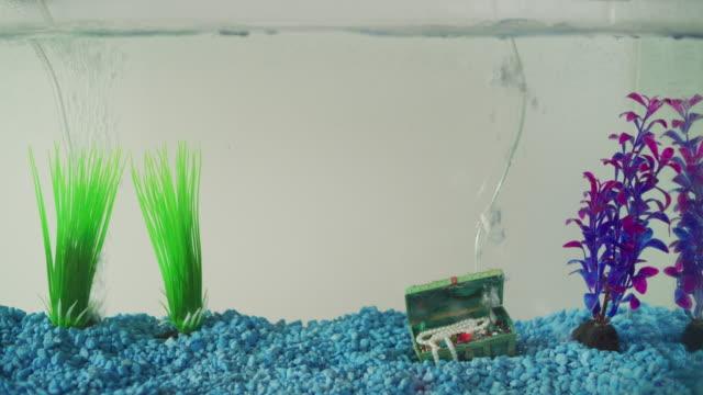 ms small cheesy empty aquarium features blue gravel a treasure chest bubbler and several plastic plants.. - elkhorn nebraska stock videos & royalty-free footage