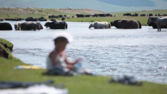 small child by the river with animals on the background - intoning bildbanksvideor och videomaterial från bakom kulisserna