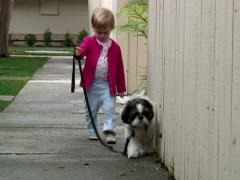 small child walking dog towards camera, zoom out - toddler stock videos & royalty-free footage