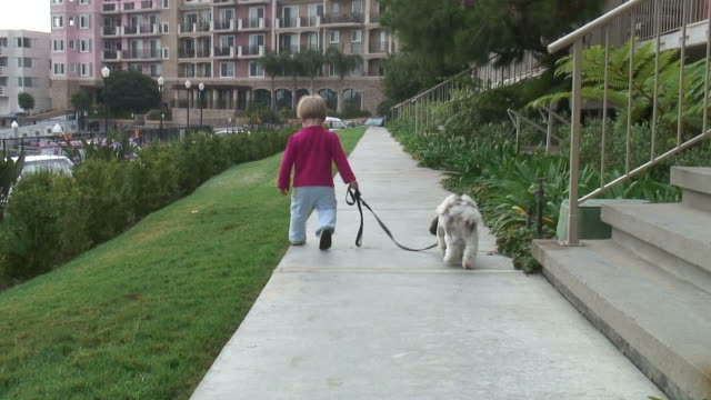 (HD1080i) Small Child Walking Dog, Zoom In