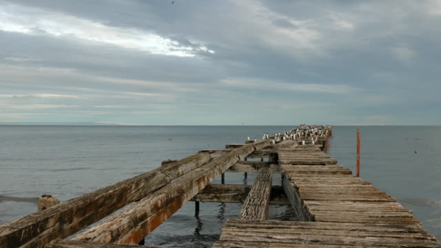 A small colony of cormorants over and old pier