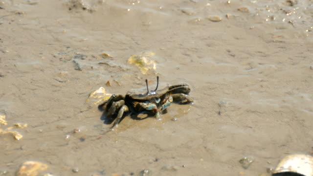 small crab walking on mud flat - mud flat stock videos & royalty-free footage
