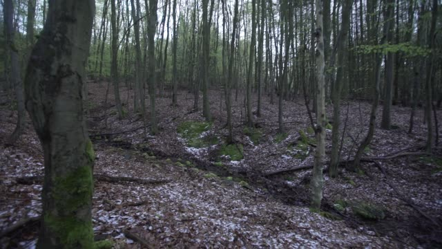 small creek flows through deciduous forest - deciduous stock videos & royalty-free footage