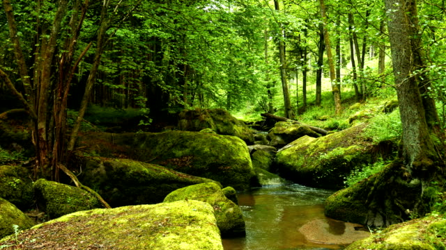 Small Creek in Rocky Forest PAN (4K/UHD to HD)