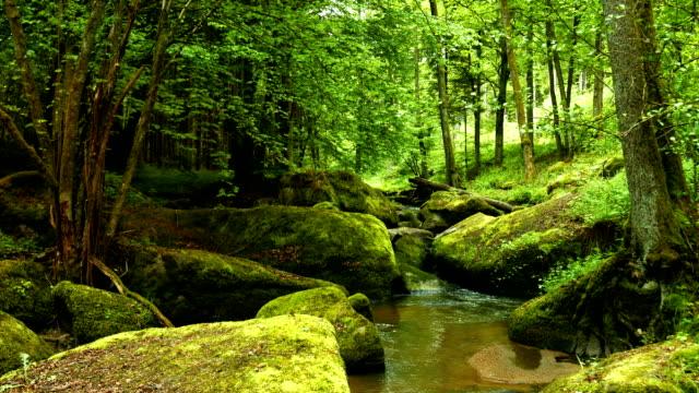 vídeos de stock, filmes e b-roll de pequeno creek no rocky forest (4 km/uhd para hd) - floresta da bavária