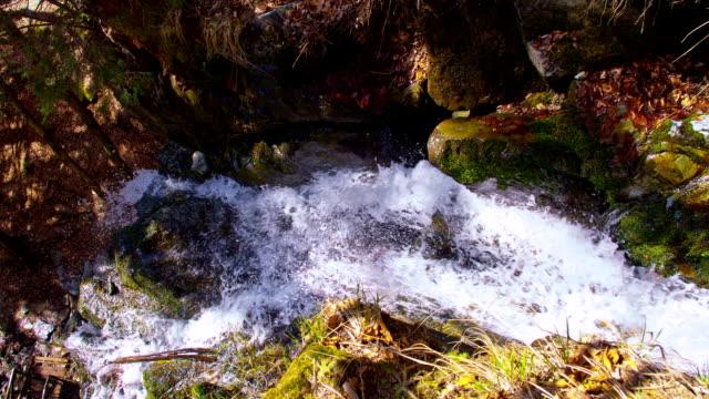 PAN kleine creek im Wald