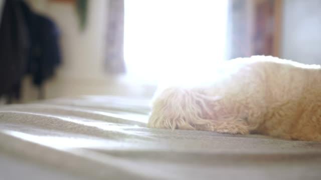 Kleiner süßer Hund, der Spaß zu Hause hat