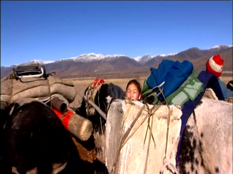 small darhad children are carried by ox and elderly lady is pulled on primative cart during nomad winter migration darhad valley mongolia - przewalskipferd stock-videos und b-roll-filmmaterial