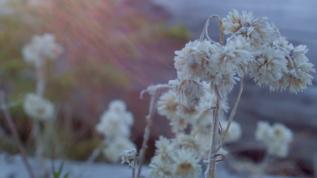 small dead macro plants in meadow sunrise mt. hood oregon cascades 41 - 枯れた植物点の映像素材/bロール