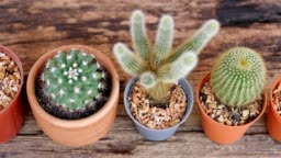 Small decoration cactus pot on wooden table