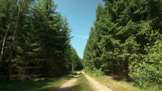 small dirt road through a forest in sweden - footpath stock videos & royalty-free footage