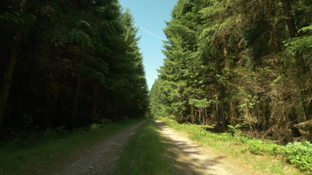 small dirt road through a forest in sweden - solitude stock videos & royalty-free footage