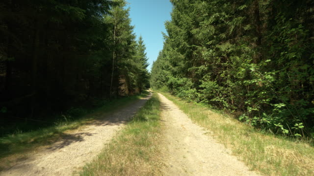 Small Dirt Road through a Forest in Sweden