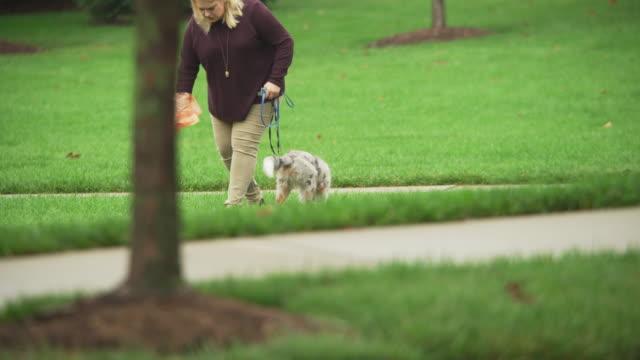 a small dog defecates in the grass in a park during a rainstorm and its owner picks up the poop in a plastic bag. - plastpåse bildbanksvideor och videomaterial från bakom kulisserna