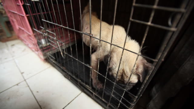 Small dog in tiny cage in animal market.