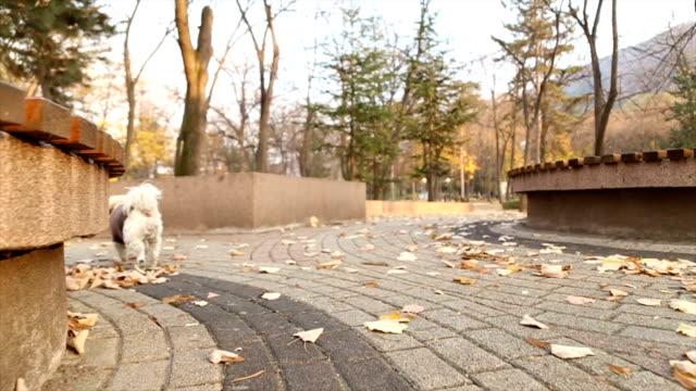 vídeos de stock, filmes e b-roll de cão pequeno está se divertindo no parque outono - casaco curto com mangas