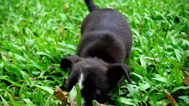 Kleiner Hund Gras laufen