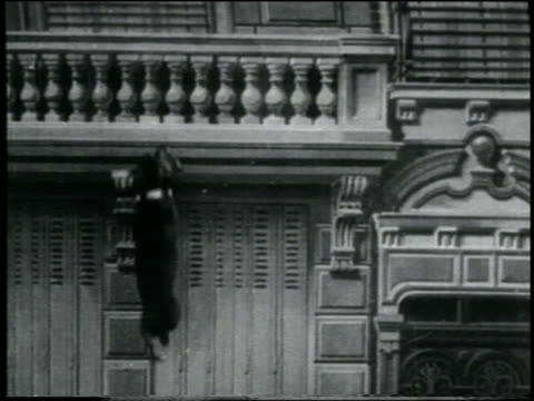 b/w 1907 small dog running up side of buidling / france / feature - slapstick stock videos & royalty-free footage