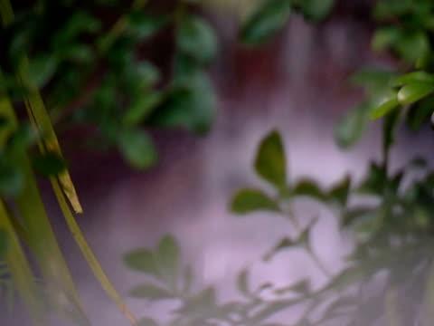 小さな滝ます。 - 熱帯の低木点の映像素材/bロール