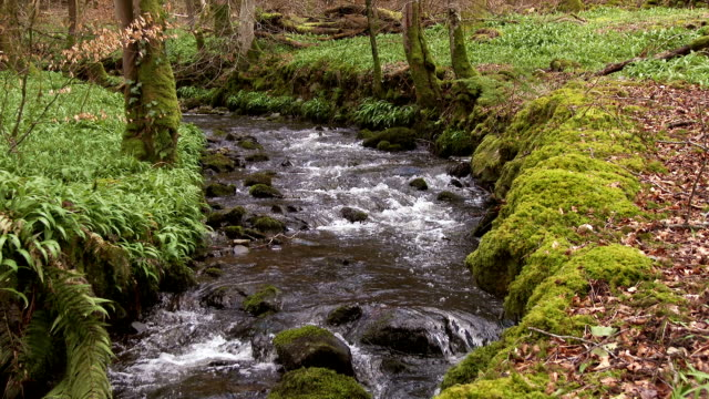 small fast flowing stream in a scottish rural woodland scene - johnfscott stock videos and b-roll footage