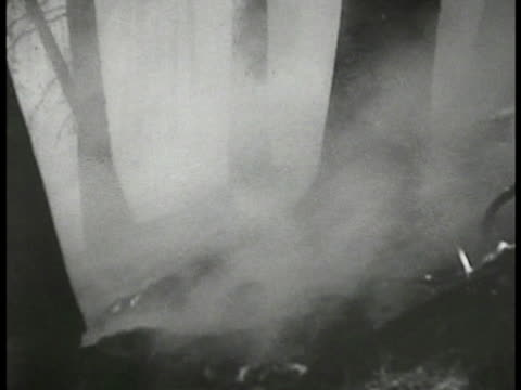 small fires at base of tree trunks w/ smoldering smoke. fades out. - 1935 stock videos & royalty-free footage