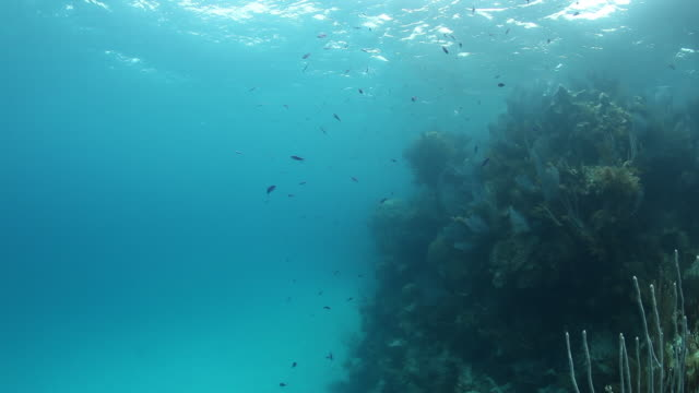 small fish swim near bermuda reef, pov - north atlantic ocean stock videos & royalty-free footage