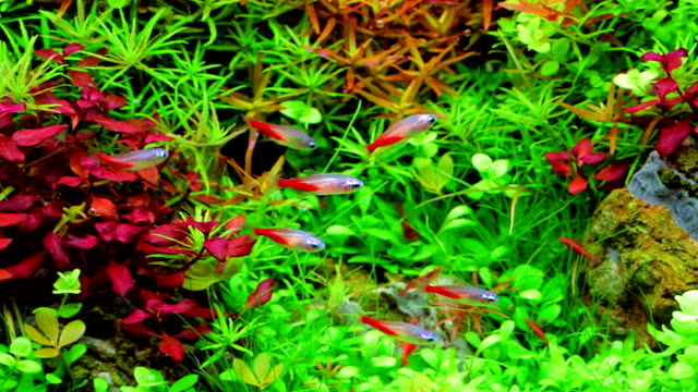 small fish - aquatic plant stock videos & royalty-free footage