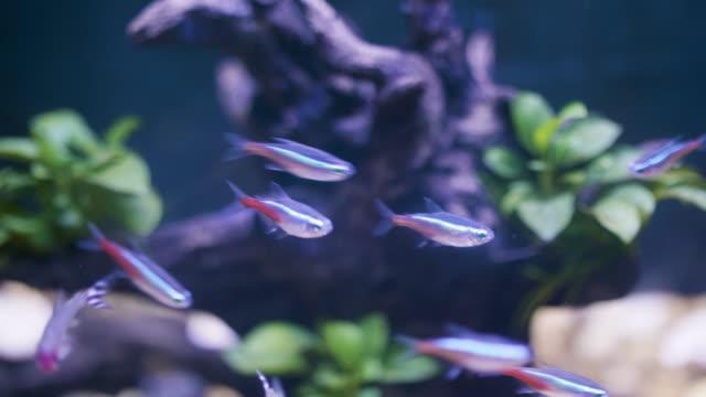 small fish - aquarium stock videos & royalty-free footage
