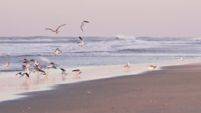 stockvideo's en b-roll-footage met small flock of birds taking off in slow motion during sunrise. - meer dan 50 seconden