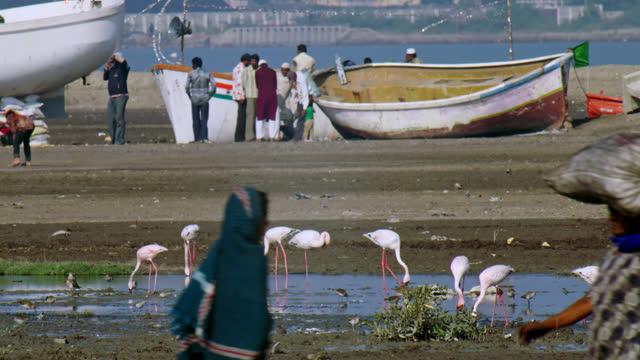 a small flock of flamingos feeding in shallow waterbody - wide shot - 食糧を捜す点の映像素材/bロール