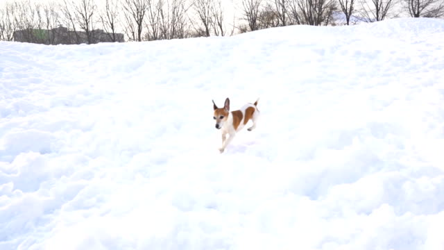 Small funny playing dog in snow