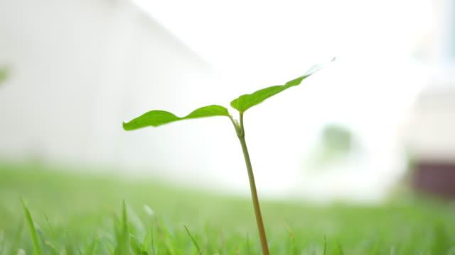 Kleine Grüne Pflanze