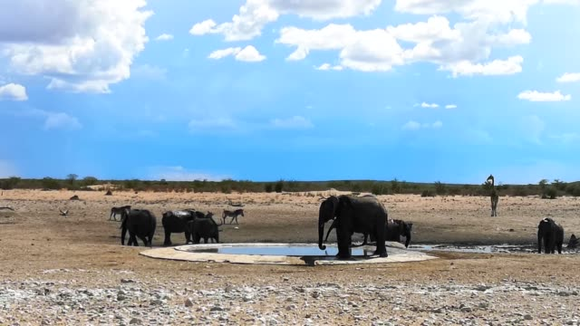 small group of african elephants drinking at waterhole in namibia 4k video - wildlife reserve stock videos & royalty-free footage