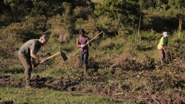 liten grupp av gård volontärer clearing borste i ett fält i brasilien - brasilien bildbanksvideor och videomaterial från bakom kulisserna