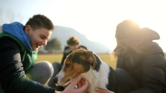 vídeos de stock, filmes e b-roll de o grupo pequeno de adolescentes joga com o cão disperso no campo. irmãos e irmã na luz traseira - young animal